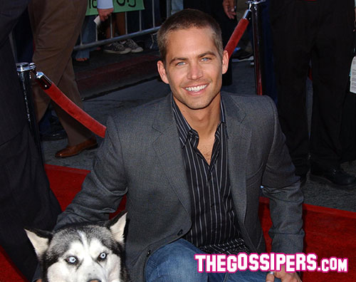 Paul Walker © kikapress