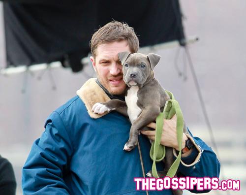 hardy Tom Hardy tenero con un cucciolo di pitbull