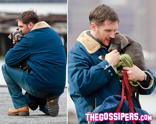 hardy2 Tom Hardy tenero con un cucciolo di pitbull