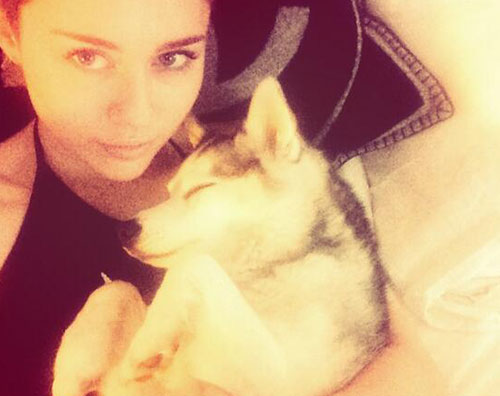 passed Miley Cyrus piange la perdita del suo cane