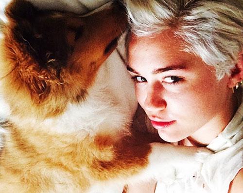 miley Miley Cyrus adotta un nuovo cucciolo