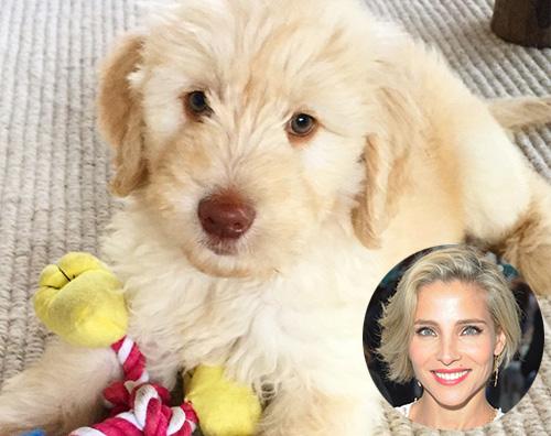 Elsa Elsa Pataky e Chris Hemsworth adottano un cucciolo