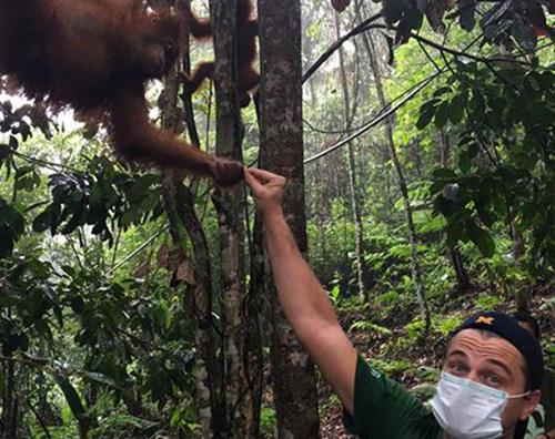 Leonardo DiCaprio Leonardo DiCaprio in Indonesia per salvare l orango di Sumatra