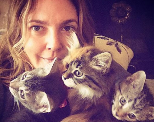Drew Barrymore Drew Barrymore ha adottato tre gattini