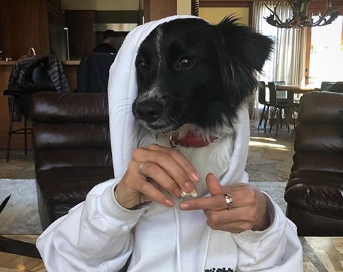 Indovina CHi Indovina il cane