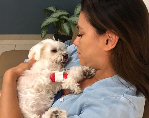 Eva Longoria Eva Longoria dice addio al suo cagnolino