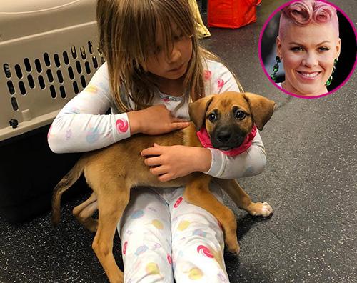 Pink Pink ha adottato un cagnolino