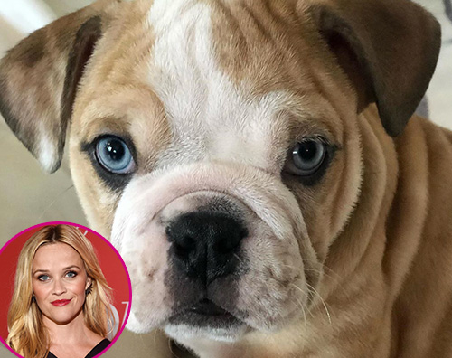 reese witherspoon Reese Witherspoon allarga la famiglia