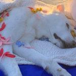 Justin Jennifer 150x150 Justin Theroux piange la morte della sua cagnolina
