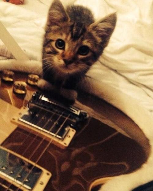 67152663 124547751845424 1363288323353381333 n Ed Sheeran dice addio al suo gattino