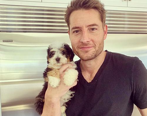 Justin Hartley, San Valentino con la sua nuova cagnolina