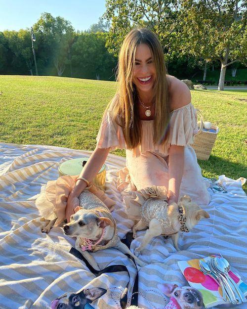 106703447 699062113983775 4443588763619371580 n Sofia Vergara festeggia il compleanno dei suoi cani