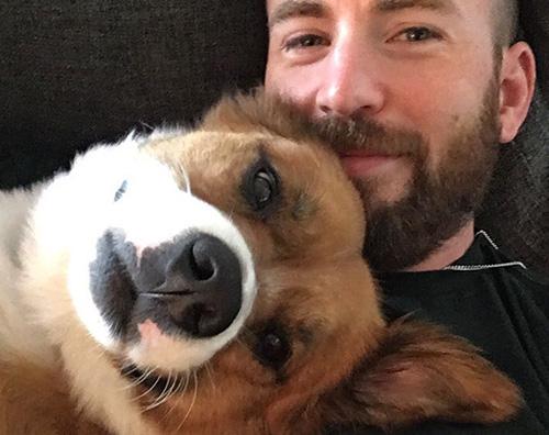 chris evans Chris Evans, selfie col suo cane