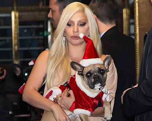 lady gaga Lady Gaga: rapiti i suoi cani